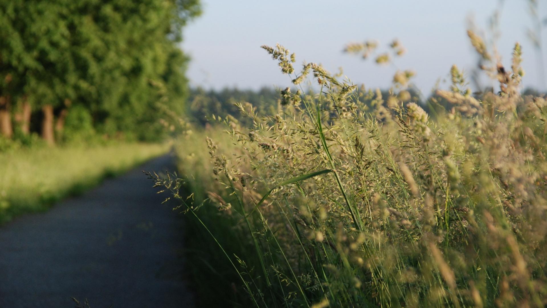 Relaunch Frühling Gräser