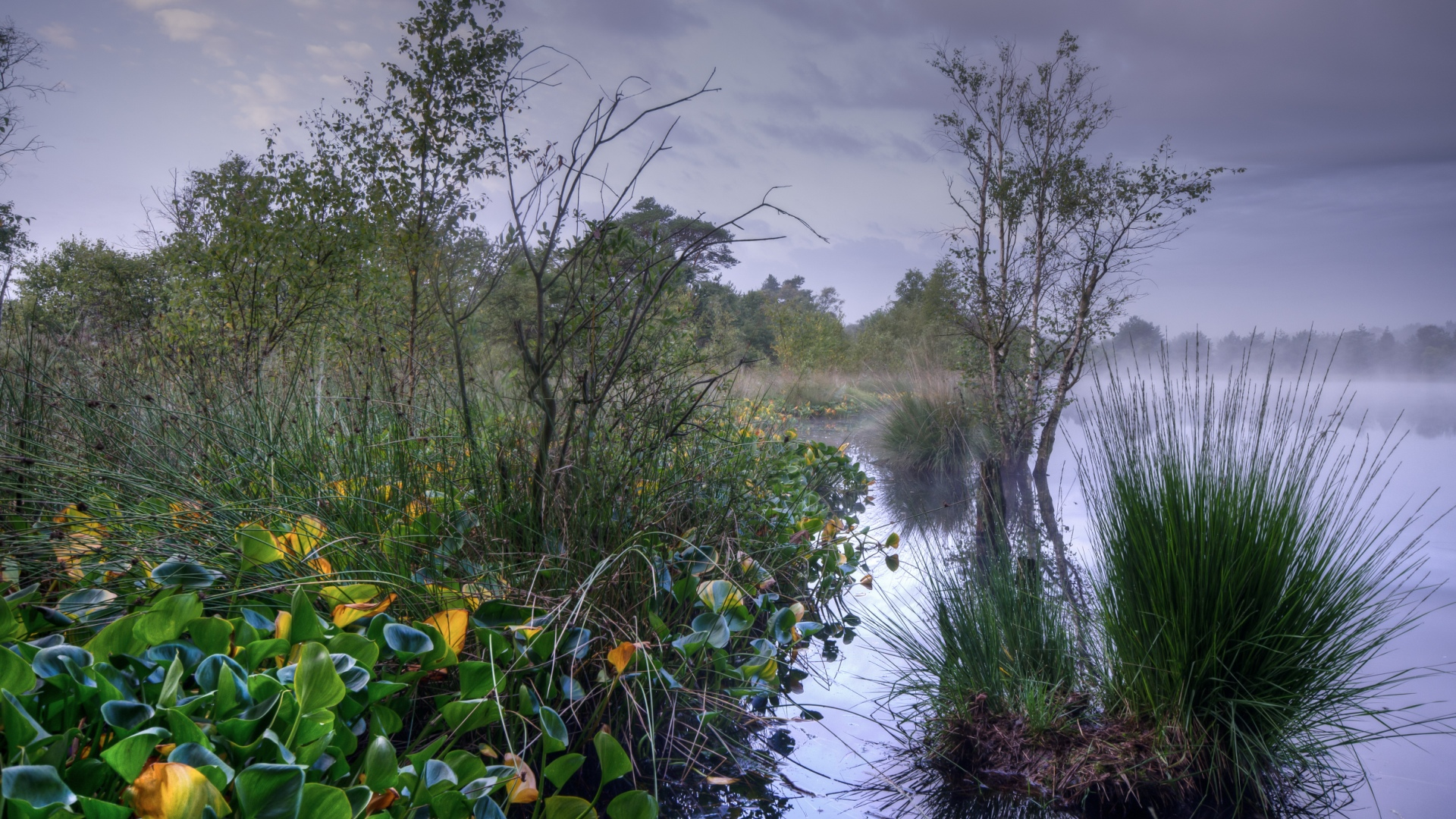 Relaunch Frühling Hamberger Moor