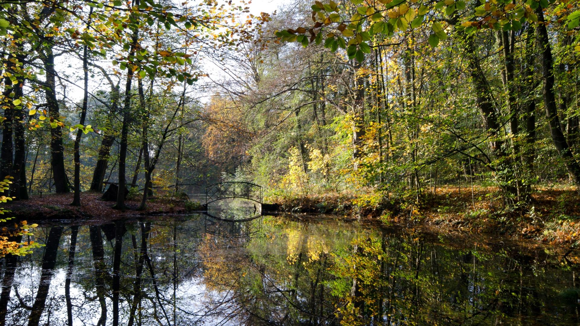 Relaunch Frühling Teich Bredbeck