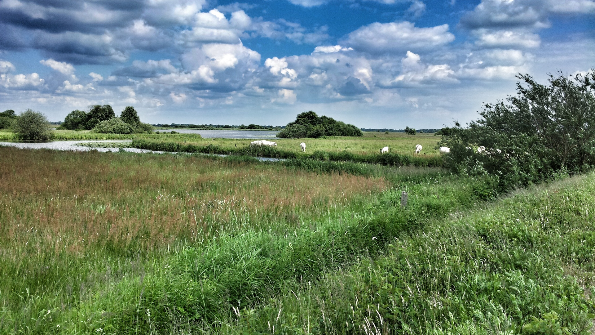 Relaunch Sommer Breites Wasser
