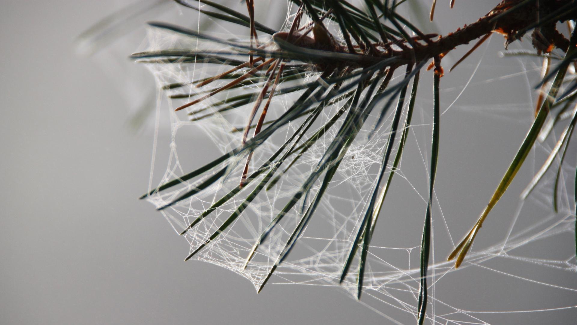 Relaunch Sommer Spinnennetz